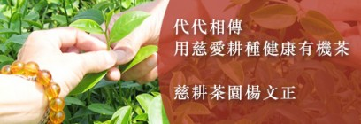 代代相傳 楊文正一家用慈愛耕種健康有機茶