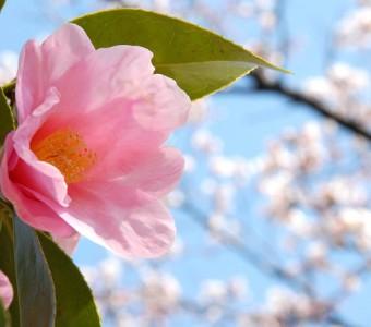 春暖花開  台灣「花見」野餐好去處