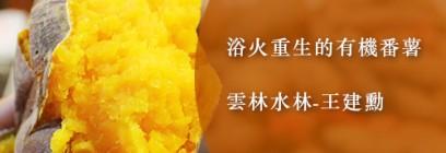 浴火重生的有機番薯 雲林水林-王建勳