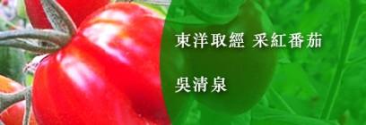 東洋取經 采紅番茄-吳清泉